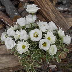composition fleurs blanches